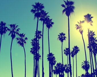 Palm Trees of Santa Barbara, Blue Skies, Sunshine, Santa Barbara, California