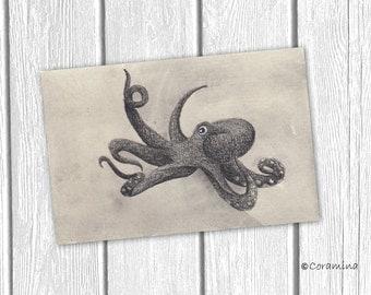"""Original illustration """"Octopus"""""""