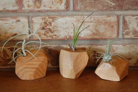Items similar to air plant holder geometric air plant for Geometric air plant holder