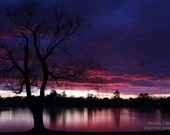 Willow Silhouette Instant Photo Download, Insta-Photo, Evening, Dusk, Purple, Dark Blue, Pink, Clouds, Tree, Nature Photography