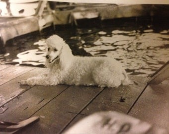 1950's Polaroid picture of poodle at boat dock boat slip