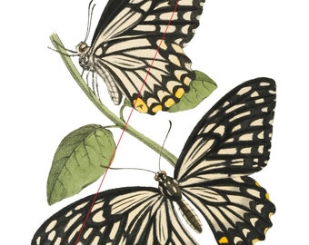 Butterflies - Temporary tattoo