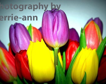 Digital Download photo, Tulips flowers