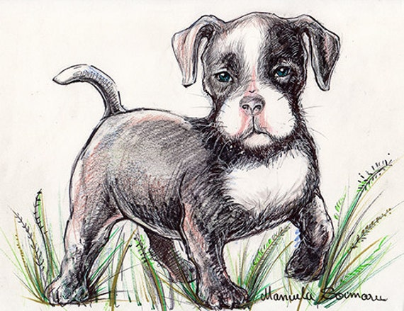 Cute Pitbull Dog Drawing