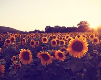 Sunflower Photography, Flower Art, Floral Decor Fine Art Print, Sunflower Decor, Flower Photos, Large Wall Art, Field of Flowers