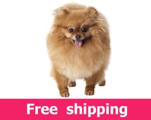 Popular Items For Pomeranian Decal On Etsy