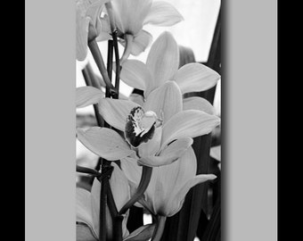 Orchid black and white canvas wrap flower photography. Flower home decor. Orchid wall art. Flower art photography. Orchids flowers.