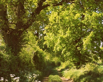 The road less travelled -A6 notecard
