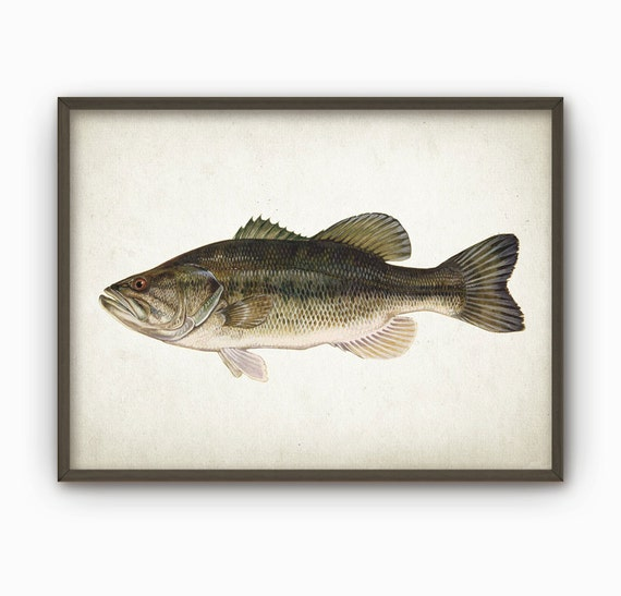 Bass Fishing Home Decor 28 Images Dci Bass Fish Trophy