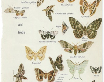 Butterflies and Moths from Audubon Nature Encyclopedia to Frame or for Collage, Scrapbooking, Paper Arts and MORE PSS 2354