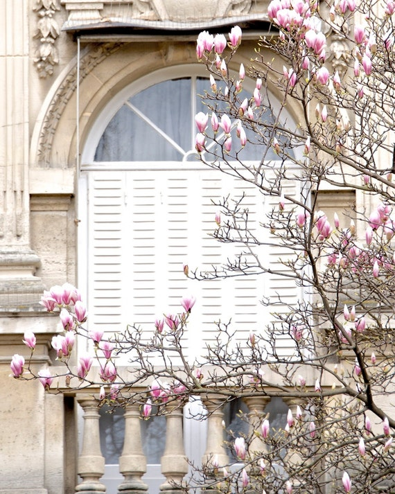 "Paris Photography, ""Magnolias"" Paris Print Extra Large Wall Art Prints, Paris Wall Decor, Gift for Her, Floral Mom Gift"