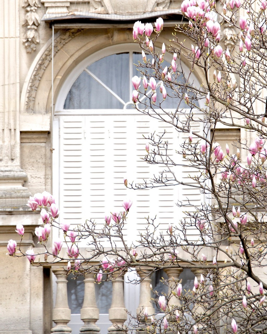"Paris Photography, ""Magnolias"" Paris Print Extra Large Wall Art Prints, Paris Wall Decor, College Student Gift for Her,"