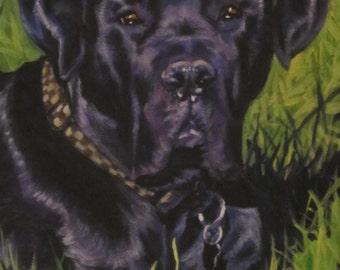 Cane Corso dog art portrait CANVAS print of LA Shepard painting 8x10
