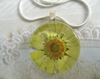 Soft Lime Green Pressed Flower Round Glass Pendant With Raindrops-Gifts Under 30-Nature's Wearable Art-Symbolizes Innocence, Loyal Love