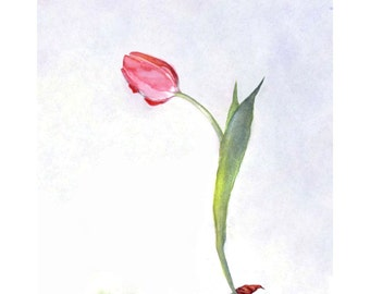 Gnomes, Gnome Card, Gnome & Pink Tulip Flower Watercolor Painting Illustration Gnome Greeting Card Print
