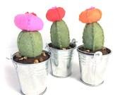 Moon Cactus Felt Succulent Plant