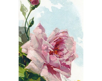 Pink Rose Card No. 3 | Repro Greeting Card | Catherine Klein