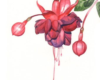 Fuchsia Watercolor painting PRINT of watercolor painting 5 by 7 print