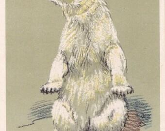 "A. Laptev ""Polar Bear"" Postcard -- 1956, Soviet Artist Publ."