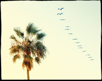 Palm Tree Art Print, Palm Tree Photography, California Art, Retro Palm Tree Photo, Birds in Flight