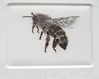 Worker Honey Bee. Limited edition drypoint