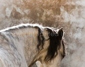 Horse Art - MARCO - Andalusian Horse  FineArt Print - Wall Decor, Equine Photography, Rustic.