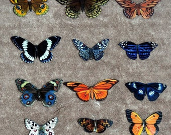 Butterfly Magnets, Insects, Set of 12 Magnets, Handmade, Refrigerator Magnets, Multi Color