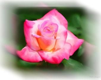 Beautiful Rose Customized Note Card