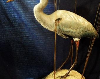 Beach Fishing, Gt. Blue Heron Sculpture, 29 in. waterbird sculpture, art