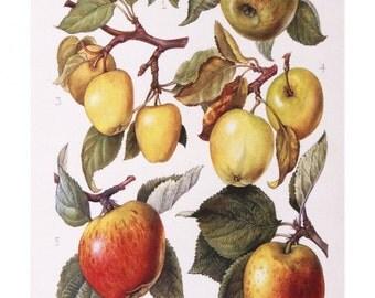 apples flowers botanical print