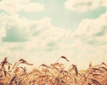 Midwest photography, country decor, fine art photograph, Illinois, rural farm, wheat field - Farm Fresh