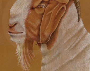 Boer Goat Original Drawing