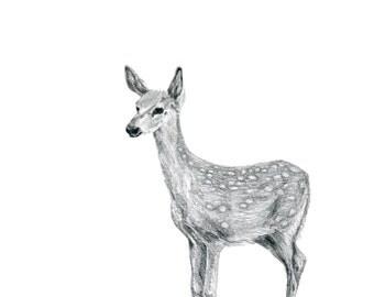 Baby Fawn Deer Illustration Digital File to Print