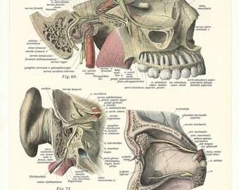 Antique page print paper ephemera anatomy human body medical anatomic vintage anatomical skeleton bones blood skull teeth neck