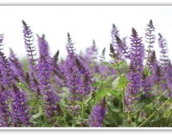 Iphone Case, Fine Art Photography, iPhone 4/4s, iPhone 5/5s, iPhone 6, Purple Flowers