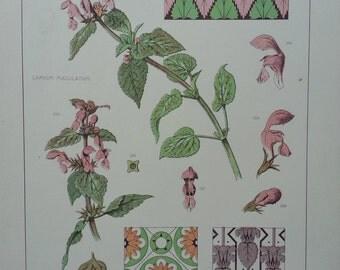 Botanical Print Lamium maculatum1874 F Edward Hulme Original Antique Victorian Print RARE Flowers Plant