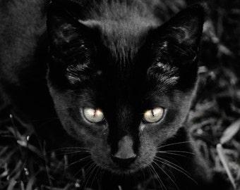 Starry Eyes - Black Cat Photo Print or Card