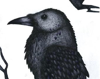 Raven Ink Illustration