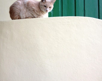 Athens Photography - Alley Cat Print - Stray - Greece - Travel