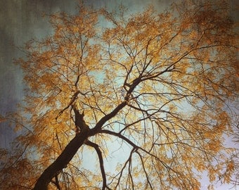 Autumn Tree in Sky, Textured Effect, Vintage Effect, Sun Reflection, Leaves, Edgy