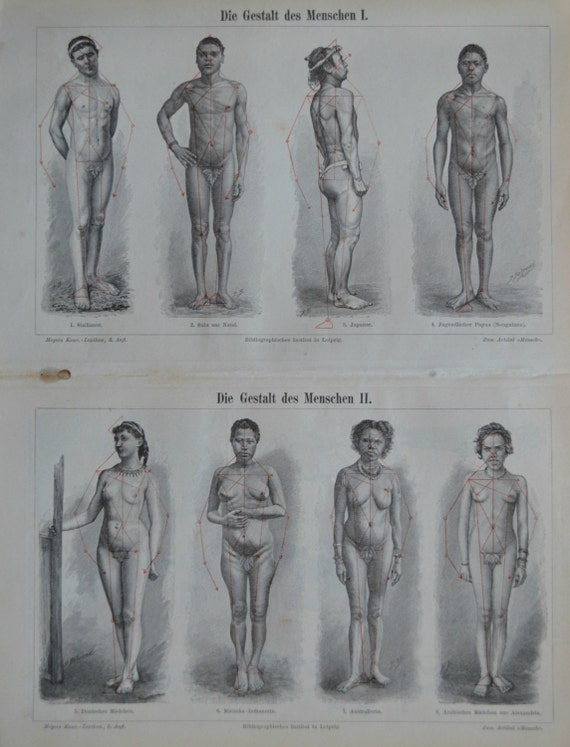 Human figure print. Anatomy engaving. Old book plate, 1897. Antique illustration. 118 years lithograph. 9'6 x 11'7 inches.