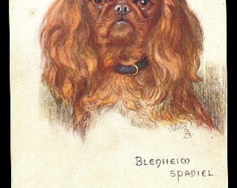 Tucks Blenheim Spaniel Maud West Watson Dog Postcard