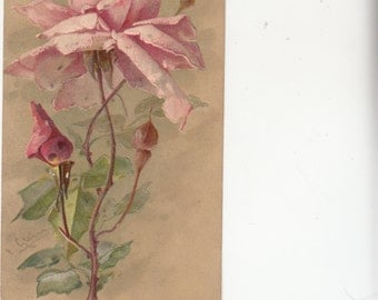 Signed Klein Large Pink Rose Embossed 1904,Undivided Antique Postcard