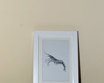 Shrimp - An A5 print of a hand drawn illustration