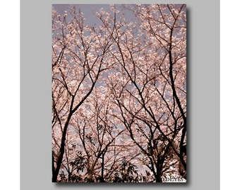Japanese Cherry blossom photography canvas print. Digitally signed. Gift for her. Flower wall art. Nature photography. Cherry blossom decor.