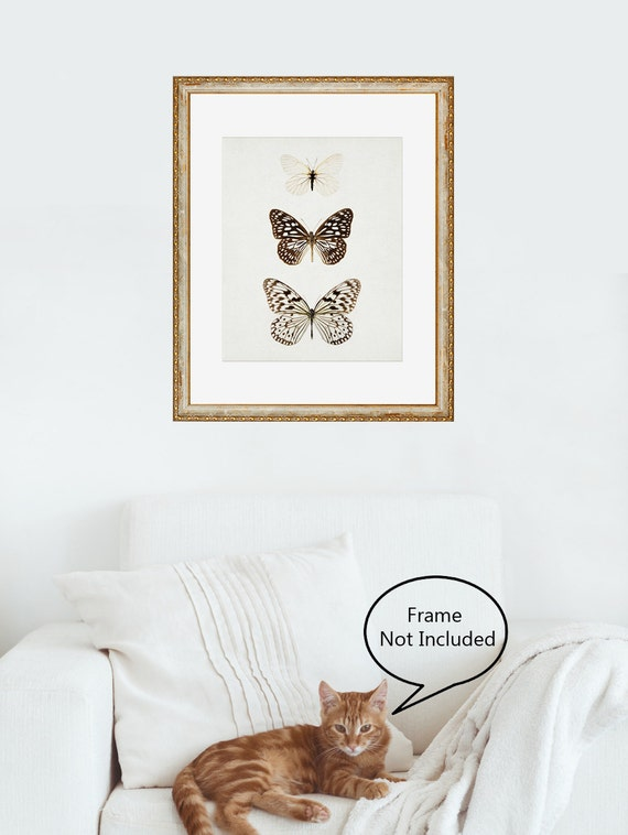 Butterfly Print, Minimalist Nature Print, Modern Art Print, Butterfly Art, Natural History, Wall Art Print, Wall Decor - Paper Kites