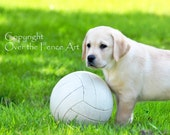 YELLOW LABRADOR Card  PUPPY Plays Soccer Greeting Card  Dog Portrait
