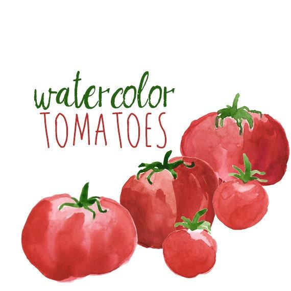 Watercolor Tomatoes Clip Art Set Veggies watercolor