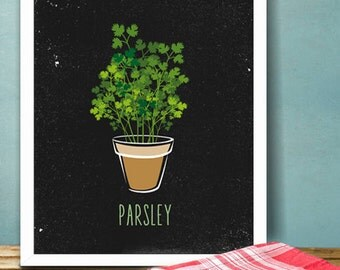 parsley herb kitchen printable poster illustration graphic design print herbs garden plants italian food