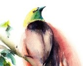Bird of Paradise Watercolor Painting Art Print, Bird Art, Watercolour Wall Art